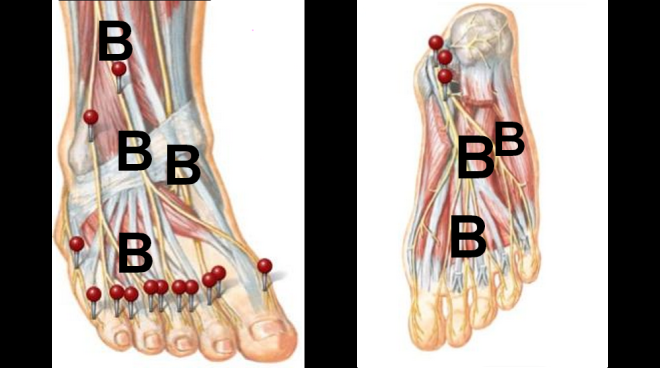 foot diagram by Netter's Anatomy